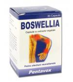 Boswellia 30 cps Reumatism, Atrita, Artroze Pentavox