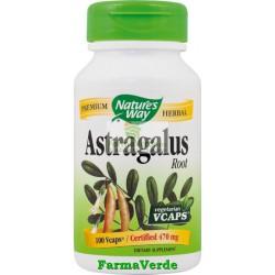 Astragalus Root 100 cps Nature's Way Secom