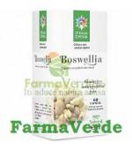 Boswellia 60 capsule 500 mg Steaua Divina