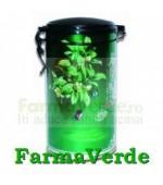 Ceai Verde Superior 100 gr Naturalia Diet
