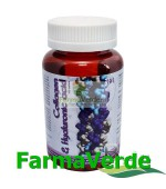 Collagen&Hyaluronic Acid 100 tablete BBM Medical