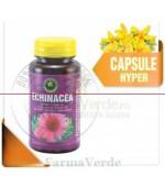 Echinacea-Echinacaea Purpurea 60 Capsule Hypericum