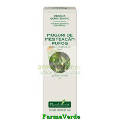 Extract Concentrat din Muguri de Mesteacan 15 ml Plantextrakt