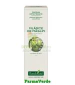 Extract Concentrat din Mladite de Maslin 15 ml Plantextrakt