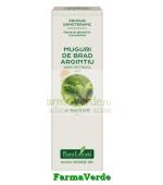 Extract Concentrat din Muguri de Brad 15 ml Plantextrakt