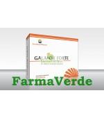 Galafor Forte Stimularea Lactatiei 30 cps Sun Wave Pharma