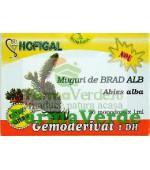 Gemoderivat de Brad Alb - Muguri 30 Monodoze Hofigal