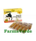 Gemoderivat de Coacaz Negru - Muguri 30 Monodoze Hofigal