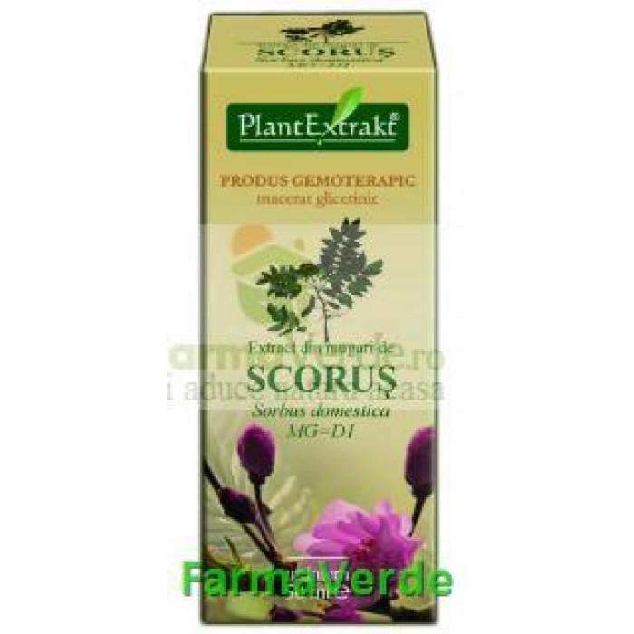 Gemoderivat Extract din muguri de scorus 50ml Plantextrakt