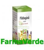 Sirop de Patlagina 100 ml Hipocrate
