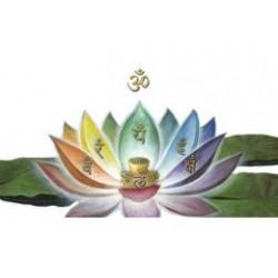 Pielea- oglinda a sanatatii şi frumusetii - Ayurveda