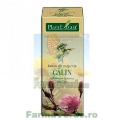 Gemoderivat Extract din muguri de calin 50ml Plantextrakt